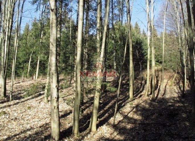 lesné pozemky - Zvolenská Slatina - Fotografia 1