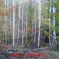Lesné pozemky, Dúbravica, 70000 m², Pôvodný stav