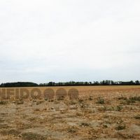 Orná pôda, Pusté Úľany, 316875 m², Pôvodný stav