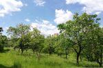 trvalý trávnatý porast - Divín - Fotografia 10