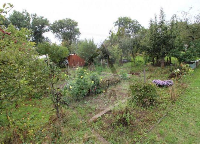 záhrada - Prievidza - Fotografia 1