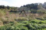 trvalý trávnatý porast - Domaniža - Fotografia 2