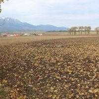 Orná pôda, Veľký Slavkov, 1038 m²