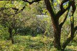 Rodinný dom - Trenčianske Teplice - Fotografia 11