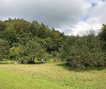 Slnečný rekreačný pozemok s povolením na výstavbu záhradnej chatky, 340 m2, Trenčín / Kubrica