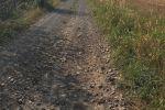 trvalý trávnatý porast - Hliník nad Hronom - Fotografia 3