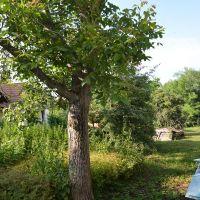 Pre rodinné domy, Špačince, 972 m²