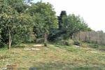 Bývalá poľnohosp. usadlosť - Bodzianske Lúky - Fotografia 5