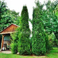 Záhrada, Nové Zámky, 406 m²