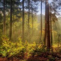 Lesné pozemky, Lopúchov