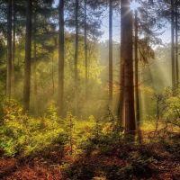 Lesné pozemky, Stakčín