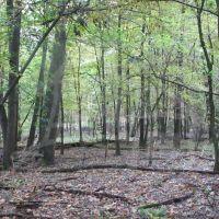 Lesné pozemky, Lozorno, 1799 m², Pôvodný stav