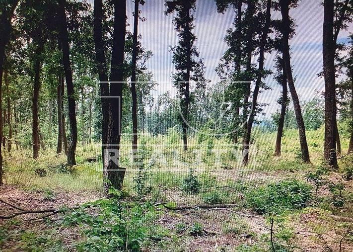 Lesná pôda-Predaj-Halič-608814.00 €