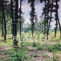 Lesné pozemky, Halič, 1044960 m²