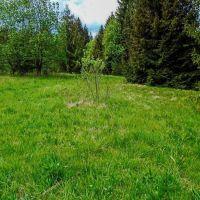 Rekreačný pozemok, Horná Lehota, 3500 m²