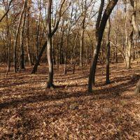 Lesné pozemky, Lozorno, 1799 m²