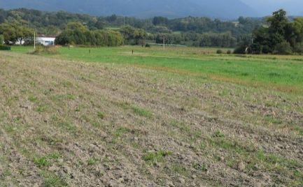 Slnečný rovinatý pozemok v Turanoch o rozlohe 2000m