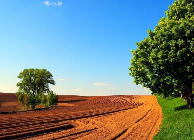 poľnohospodárska pôda - Horné Mladonice - Fotografia 1