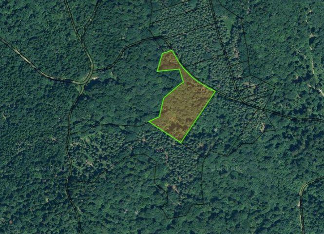 lesné pozemky - Nálepkovo - Fotografia 1