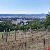 Záhrada, Bratislava-Lamač, 680 m²