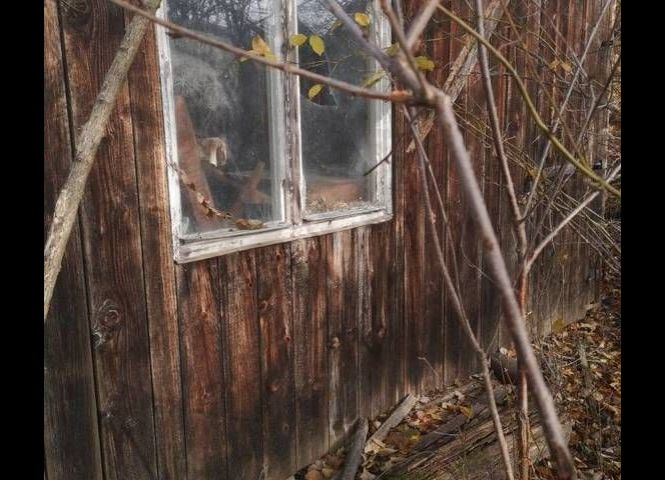 záhrada - Stupava - Fotografia 1