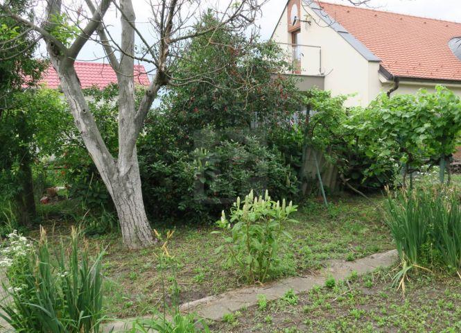 záhrada - Dunajská Streda - Fotografia 1