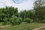 záhrada - Dunajská Streda - Fotografia 7