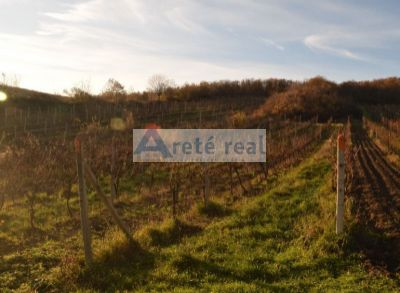 Areté real - Predaj vinice s lesom a lúkou- Modra.