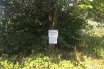 záhrada - Humenné - Fotografia 3
