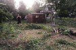 záhrada - Humenné - Fotografia 5