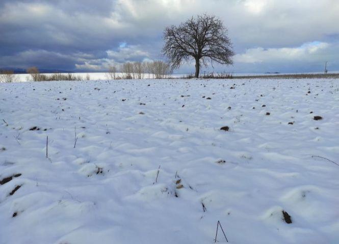 orná pôda - Bojná - Fotografia 1