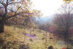 záhrada - Štiavnické Bane - Fotografia 7