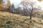 záhrada - Štiavnické Bane - Fotografia 8