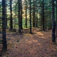 Lesné pozemky, Halič