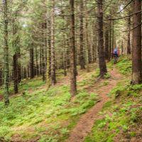 lesné pozemky