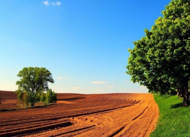 poľnohospodárska pôda - Vavrečka - Fotografia 1