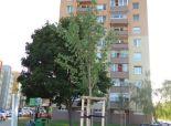 SENEC – NA PREDAJ zrekonštruovaný 3 izbový byt  vo vyhľadávanej lokalite blízko centra - ul. J. Jesenského