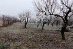 rekreačný pozemok - Štúrovo - Fotografia 2