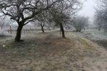 rekreačný pozemok - Štúrovo - Fotografia 5