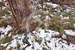 poľnohospodárska pôda - Malý Šariš - Fotografia 3