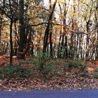 Lesné pozemky, Bratislava-Dúbravka, Pôvodný stav
