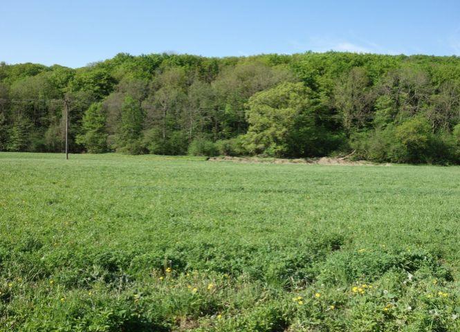 orná pôda - Chocholná-Velčice - Fotografia 1