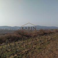 Vinice, chmelnice, Modra, 4584 m²