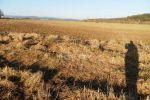 poľnohospodárska pôda - Zvolen - Fotografia 4