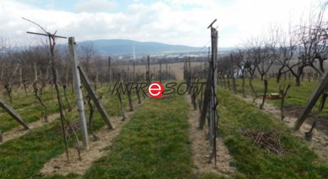 Na predaj vinohrad v Zlatých Moravciach