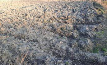 Orná pôda v Seliciach na predaj