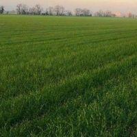 Orná pôda, Malacky, 4532 m²