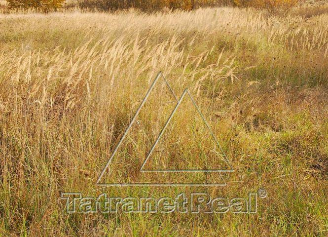 záhrada - Papín - Fotografia 1