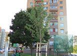 REZERVOVANÉ - SENEC zrekonštruovaný 3 izbový byt  vo vyhľadávanej lokalite blízko centra - ul. J. Jesenského