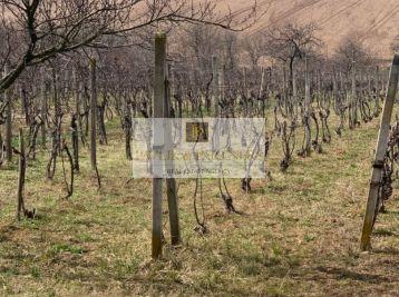 Predaj vinica s viničným domčekom,Vráble.